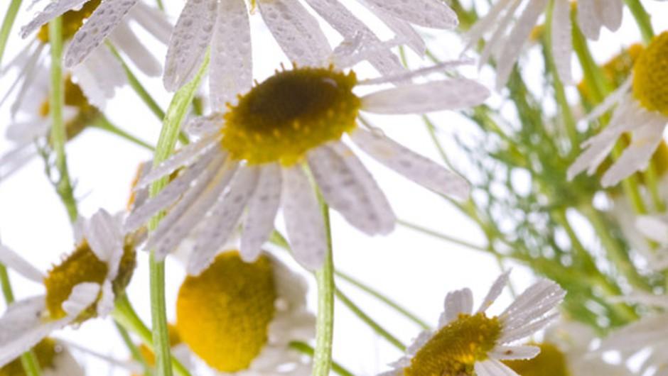 Eliksir lepote se skriva v pari (foto: Shutterstock)