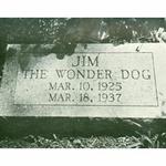 Jim - čudežni pes, ki je napovedoval prihodnost (foto: Jih the wonder dog)