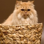 """""""Na las sem podobna mački - ker sem prava crkljivka in rada predem."""" (foto: Nadja Zobec, shutterstock)"""