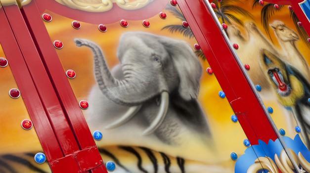 DZZŽ LJ z odločnim NE cirkusom z divjimi živalmi (foto: shutterstock)