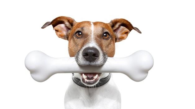Sreča je, sreča je ... največja kost? (foto: shutterstock)