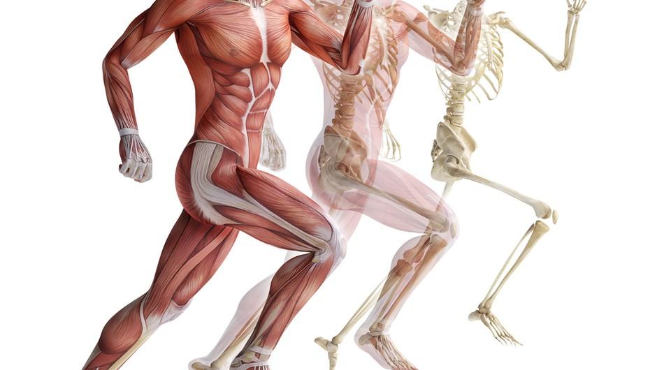 Človeško telo - ta čudovit stroj! (foto: shutterstock)
