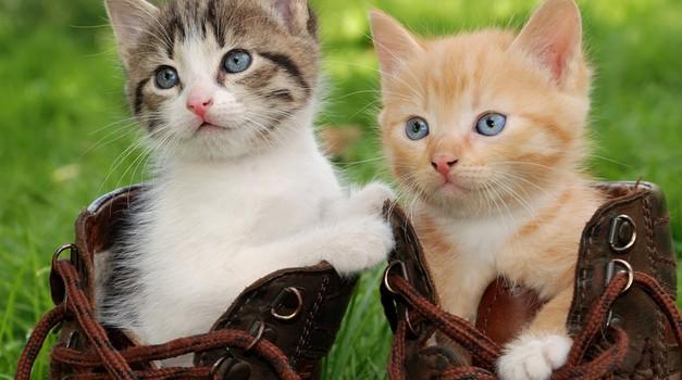Podaritev dela dohodnine v dobrobit živali te nič ne stane!