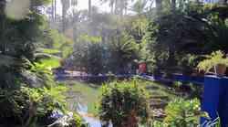Fotografije čudovitega vrta Majorelle v Maroku