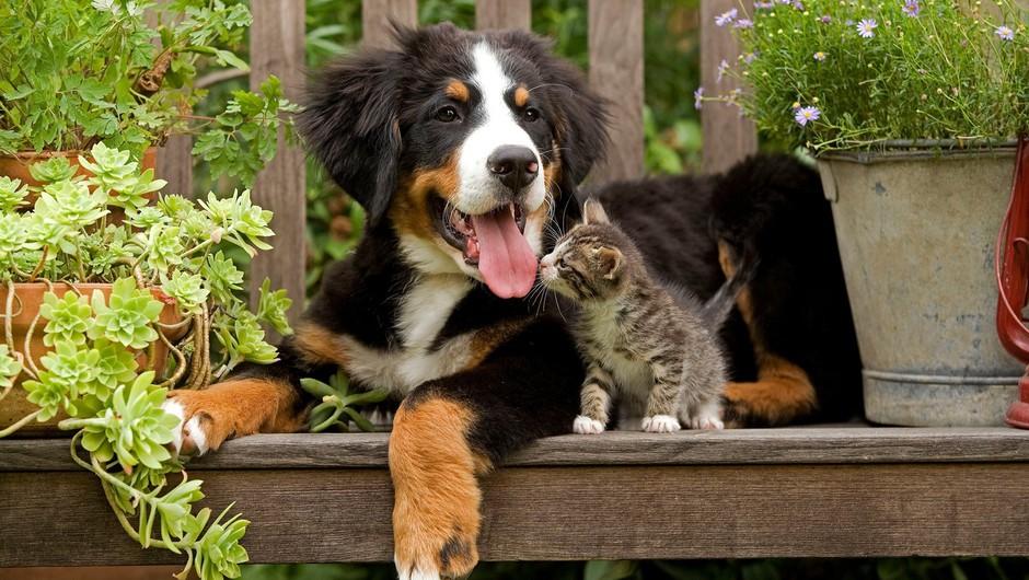Skoraj četrt milijona psov in pol milijona mačk?