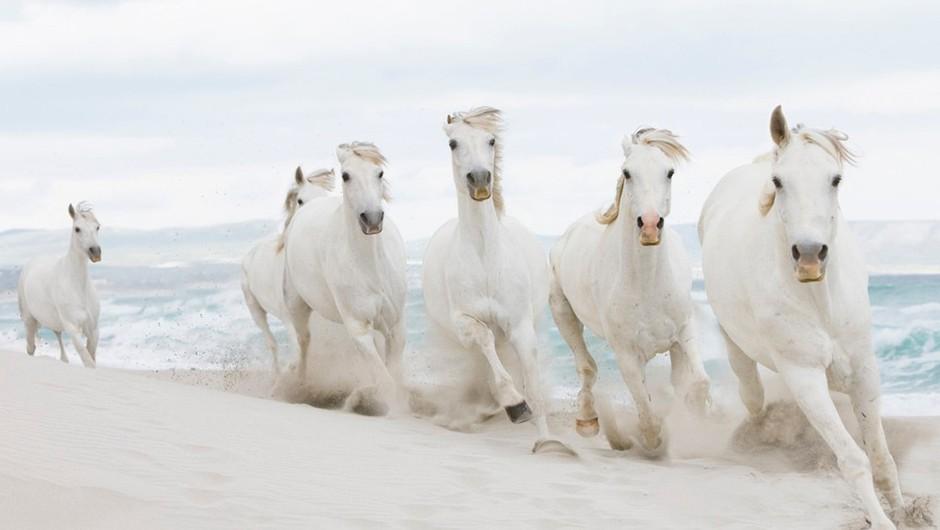 Kitajski horoskop: Leto 2014 bo v znamenju konja!