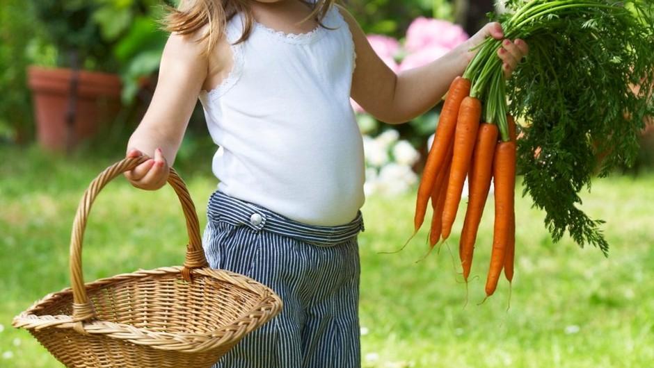 Premalo kmetijskih površin za popolno samooskrbo!  (foto: profimedia)