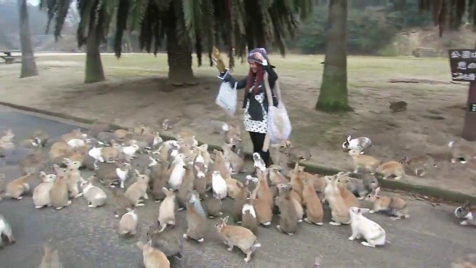 Če kdaj zmanjka zajcev, vemo kam jih gremo lahko iskat ... (foto: YouTube)