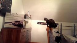 Mačka, ki želi skočiti v terarij, te bo nasmejala do solz