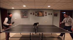 Poglej, zakaj je igranje ping ponga bolj zabavno, če je na mizi maček