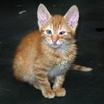 Takole majhen in ubogi je bil, ko so ga našli zavrženega na ulici. (foto: profimedia)