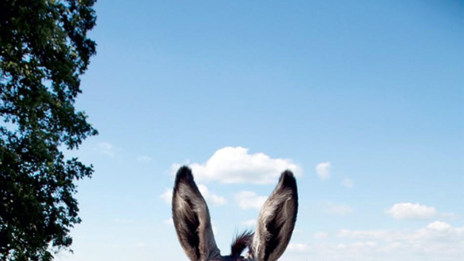 Turistične novice - smučarija, soline in istrski osli (foto: shutterstock)