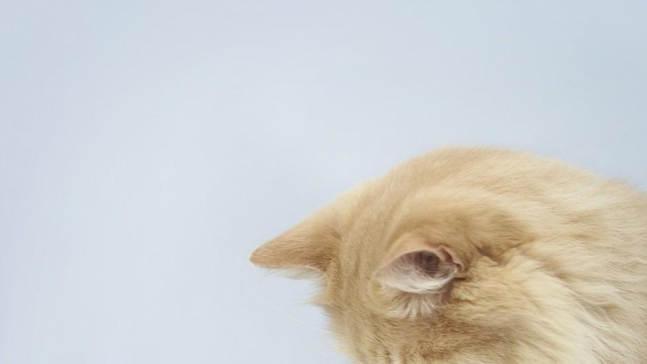 Kaj pa velike mačke? Te marajo vodo? Preveri v videu! (foto: profimedia)
