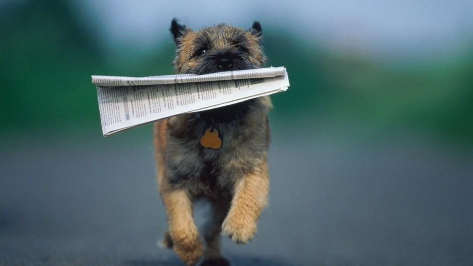 Zbiralna akcija starega papirja za naravo in živali! (foto: profimedia)