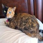 Spoznaj mačkona z najbolj nenavadnim obrazom na svetu! (foto: profimedia)