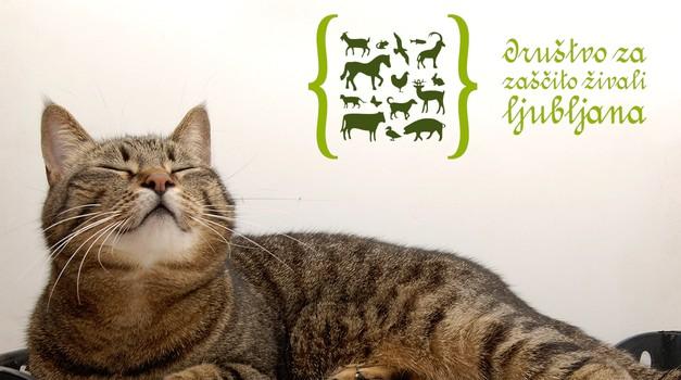 Že 14. akcija zbiranja starega papirja za živali!