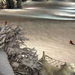 6 razlogov, zakaj komaj čakamo na Ski Opening v Civetti (foto: Skifun)
