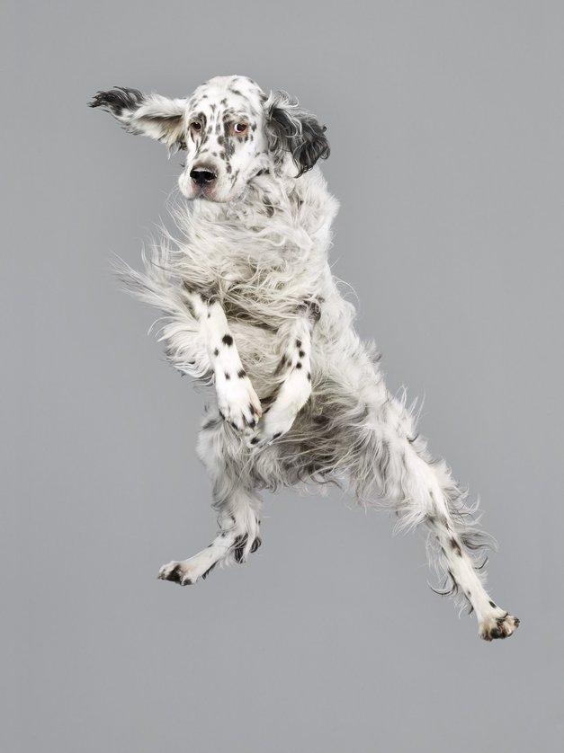 Fotogalerija letečih pasjih gobčkov in kosmatih ušes (foto: profimedia)