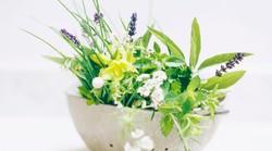 Zelišča - zdravilne rastline so z nami od nekdaj