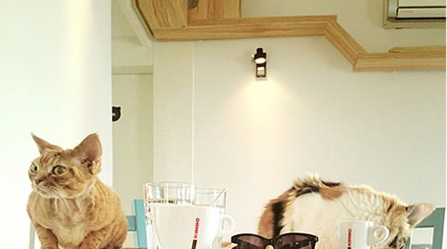 V Ljubljani obišči kavarno, v kateri vladajo mačke
