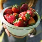Jagode in drugo jagodičevje - vsebujejo veliko folatov, vitamina C in  mangana in vlaknin. Jagode znižujejo slab holesterol, za 32 odstotkov zmanjšajo tveganje za srčni infarkt, zavirajo pa tudi vnetja. Jej jih same, dodaj v jogurt in solato, ali iz njih naredi smoothie.  (foto: Profimedia)