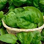 Špinača - vsebuje najbolj raznovrstne vitamine izmed vse zelenjave, ki raste pri nas. Bogata je z vitamini A, B2, B6, C, E, K, vlakninami, kalcijem, železom, magnezijem, kalijem, bakrom, manganom in antioksidanti. Si vedela, da kratkotrajno kuhanje špinače  ne uniči njenih bogatih hranil? Zato jo le pogumno uporabi za juhe in na hitro pripravljene omake. Uporabi pa jo seveda tudi svežo v solati ali v smoothiejih. (foto: Profimedia)