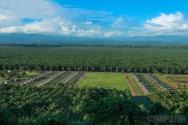 plantaže palmovega olja