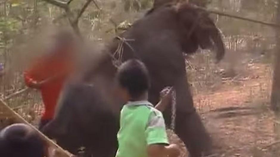VIDEO: Zakaj ne bi NIKAKOR smeli jezditi slonov na Tajskem! (foto: Youtube)