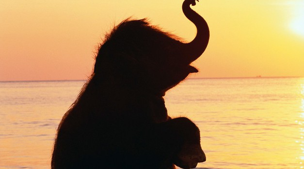 Ta ganljiva zgodba o slonu ti bo spremenila pogled na življenje (foto: Profimedia)