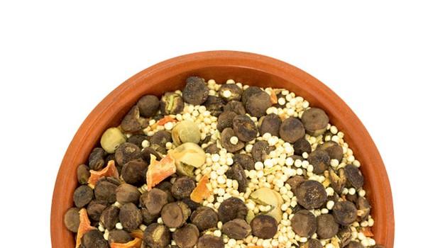 Najbolj trendi superhrana ta hip: beljakovinski prah iz čričkov! (foto: Shutterstock)