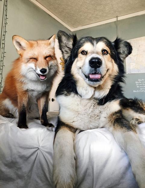 Ona je Juniper, on je Moose. In med to prisrčno lisičko in psom se je spletna posebna ...