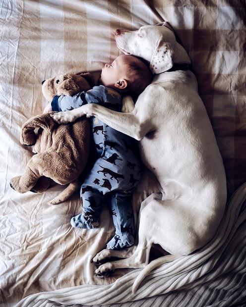 Njuna naklonjenost se še najbolj vidi med spanjem, kjer Archie objema svojo ogračko, psička Nora pa kar Archieja. Tako je …