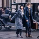 Gremo v kino: J.K. Rowling  - Magične živali! (foto: Blitz Film)