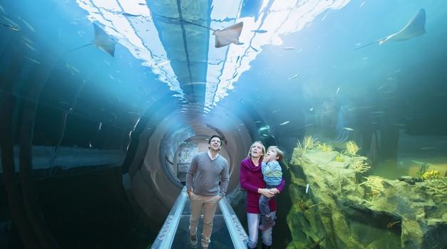 Na Dunaju nov akvarij, kjer se z morskim psom srečaš iz oči v oči (foto: Daniel Zupanc)