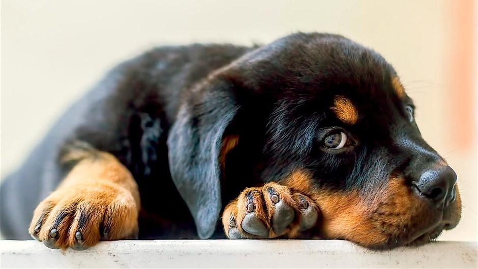 Praznično pokanje - hud stres za pse! Morda ga umiriš s tem (pasji radio) (foto: Profimedia)