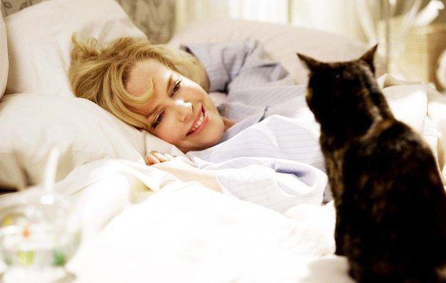 Ljubitelji mačk so v eni stvari VELIKO BOLJŠI od ljubiteljev psov (foto: Profimedia)