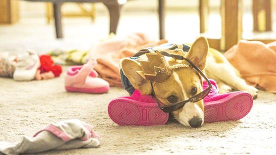 Awww! Strokovnjaki ugotovili, o čem sanjajo naši hišni ljubljenčki  (Mi se topimo!) (foto: Profimedia)
